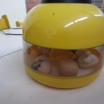 Kiaušiniai 007