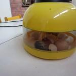 Kiaušiniai 009