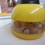 Kiaušiniai 006